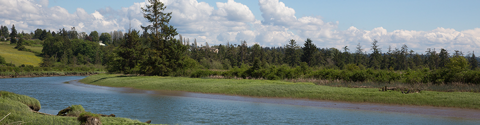 Qwuloolt Estuary Restoration Project of the Tulalip Tribes - River Channel View